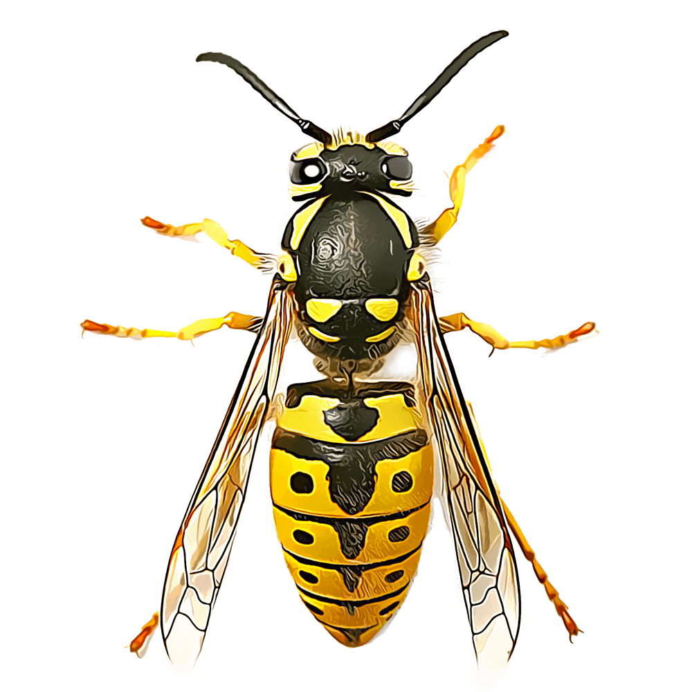 wasp1 1